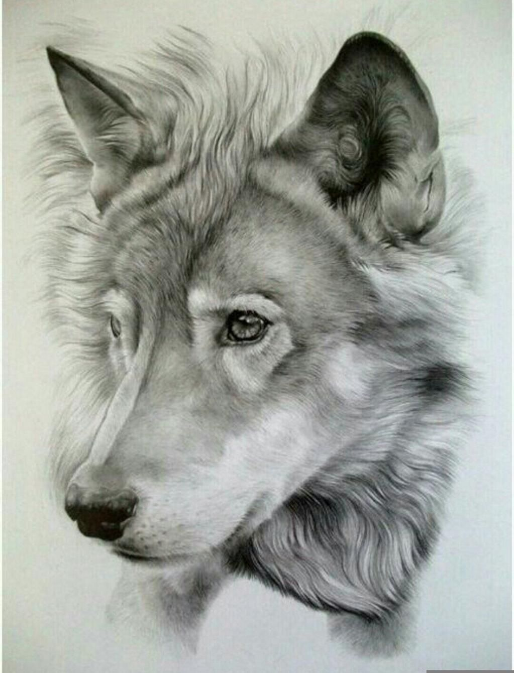 Drawings Of Animals Realistic