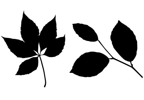 Free Leaf Silhouette Vector Two Leaves Vector Leaf Silhouette Silhouette Vector Silhouette Images