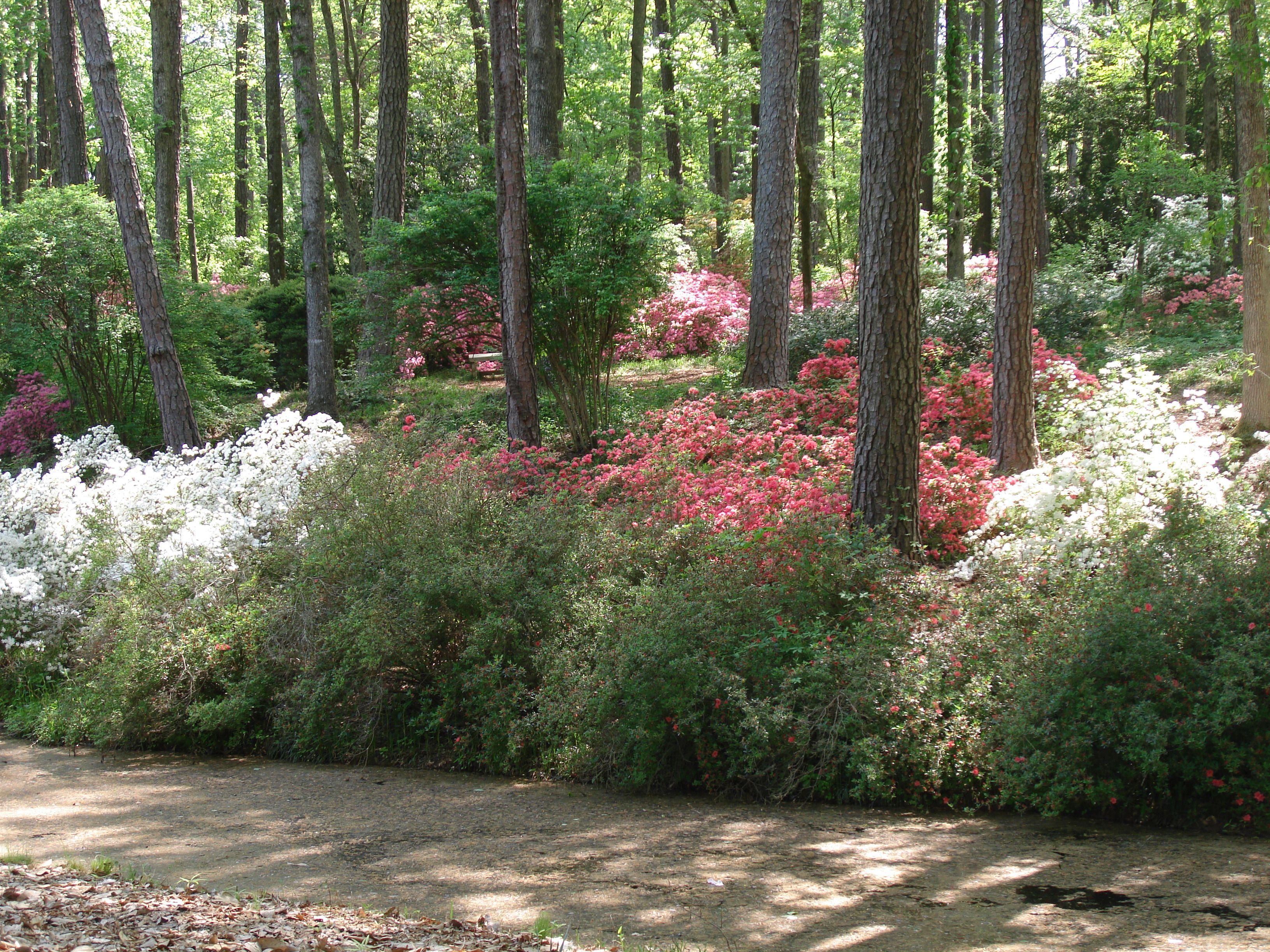 Callaway Gardens Pine Mountain Ga Georgia Pinterest