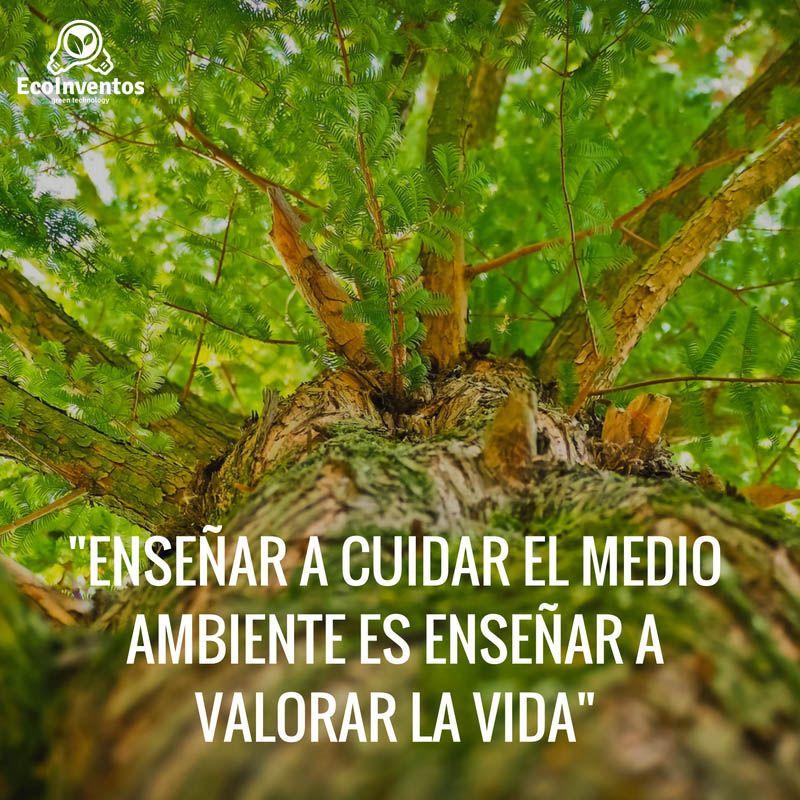 Enseñar A Cuidar El Medio Ambiente Es Enseñar A Valorar La Vida Medio Ambiente Frases Frases Ambientales Cuidado Del Medio Ambiente