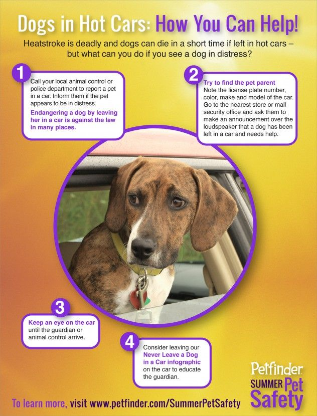 Infographic How You Can Help Dogs In Cars Petfinder Dogs