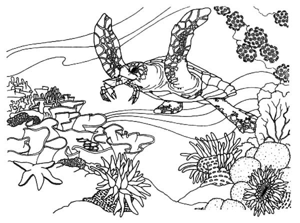 Coral Reef Fish, : Coral Reef Fish Ecosystem Coloring