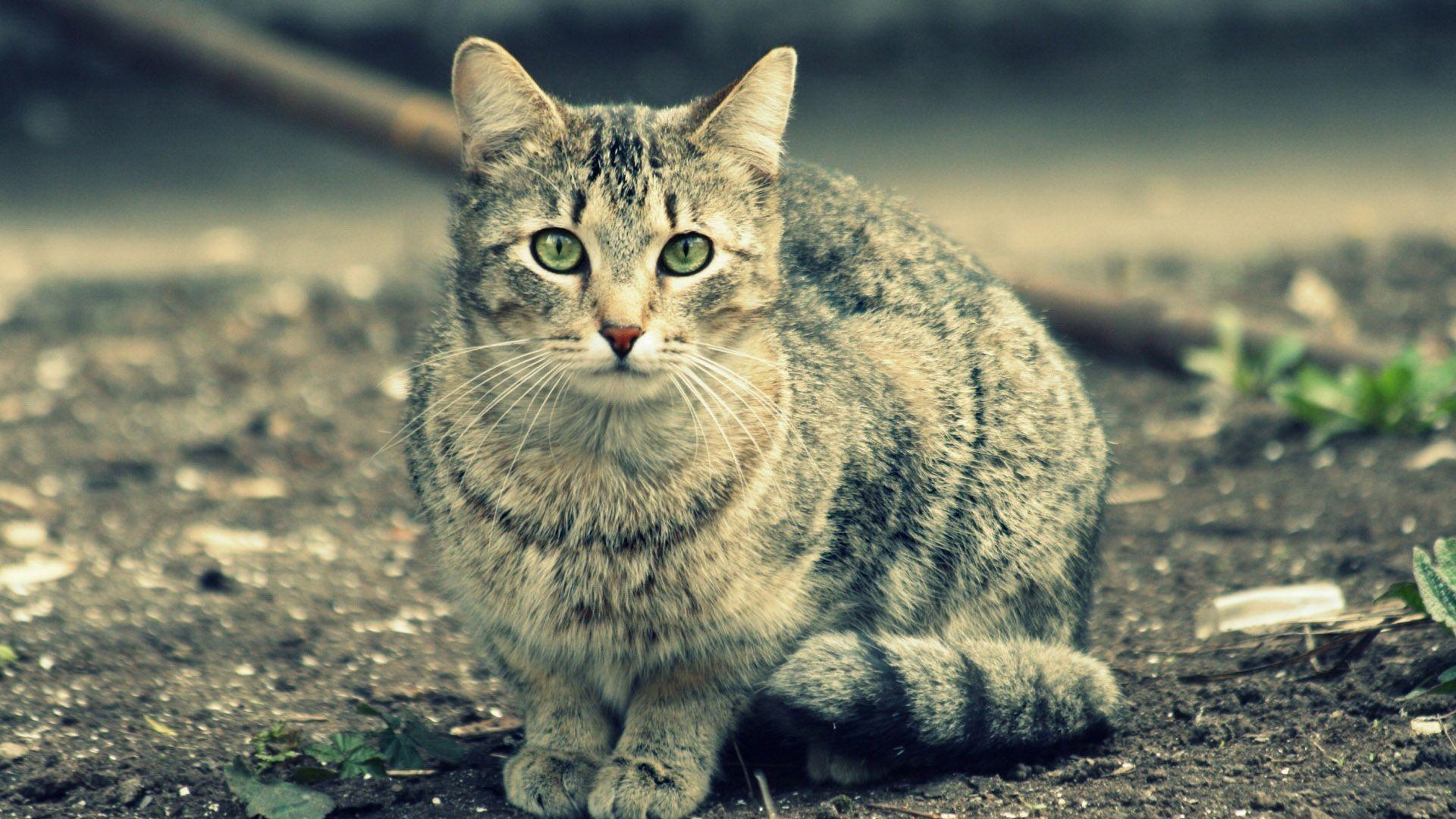Pin Von Mark Auf I Love Cats Ausgestopftes Tier Graue Katzen Katzen