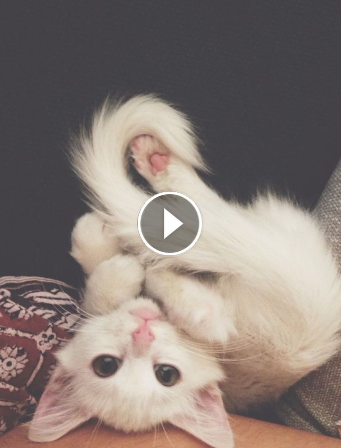 Kittens Meet Puppies For The First Time Try Not To Laugh Cats Meeting Dogs Funny Kitty Ca In 2020 Cute Kitten Gif Cats And Kittens Cute Animals With Funny Captions