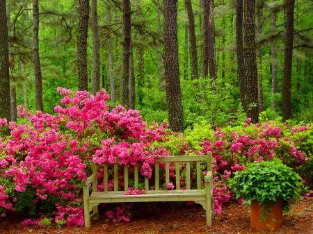 Arboles hermosos con flores google search jardineria for Jardineria paisajista