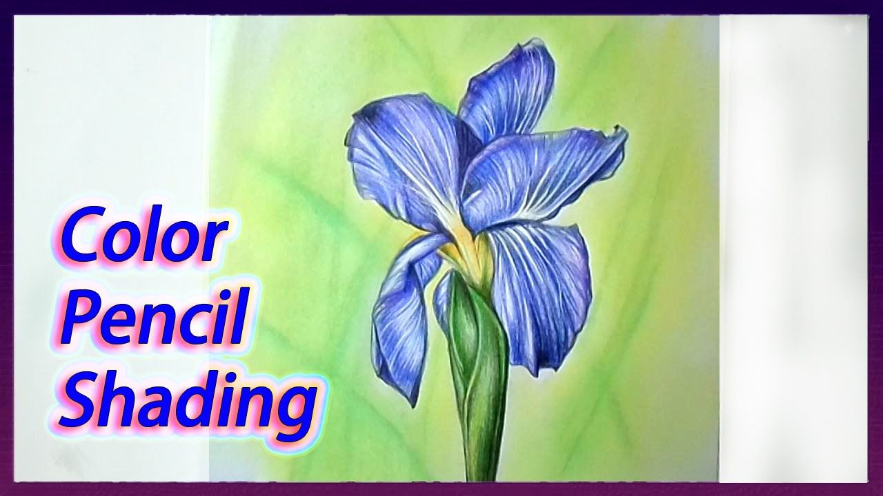 Realistic Color Pencil Drawing Tutorial Of Iris Flower Pencil Drawing Tutorials Drawing Tutorial Iris Drawing