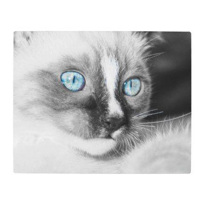 White Kitten with Blue Eyes Metal Print | Zazzle.com #whitekittens