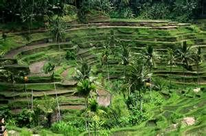 images Bali Indonesia - Bing Images