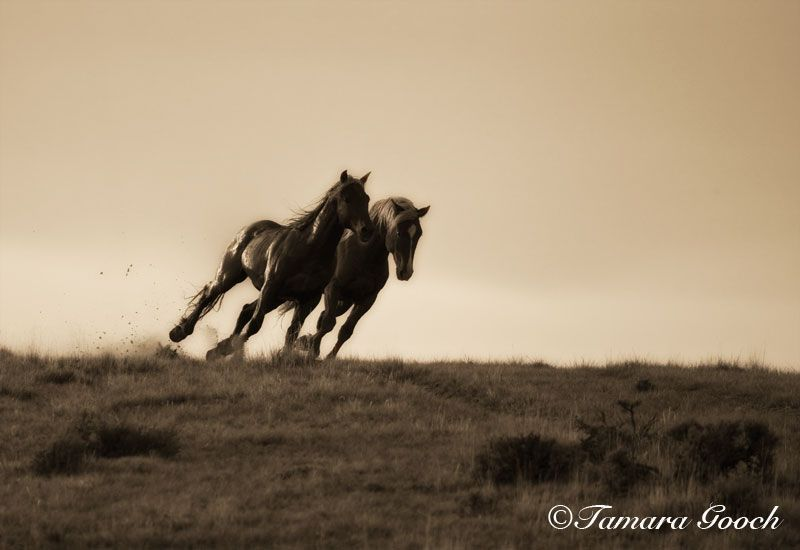 Mustang Moments Photo_E4C2875