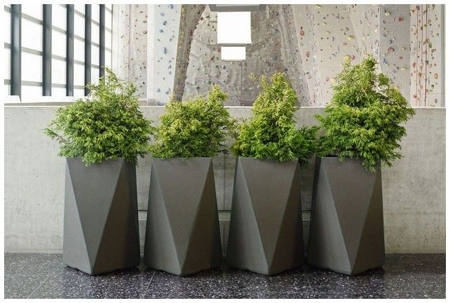 Large Indoor Planters Google Search Modern Bahceler Ev Bitkisi Bahce Tasarimi