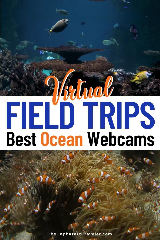 Virtual Field Trip: Aquarium Live Feeds & Ocean We