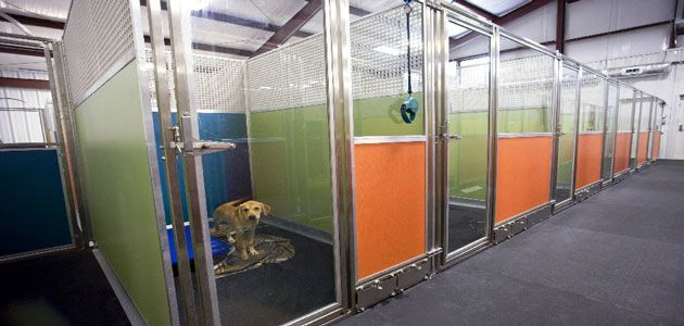 Add A Little Pizzazz To Your Space Mason Company Kennel