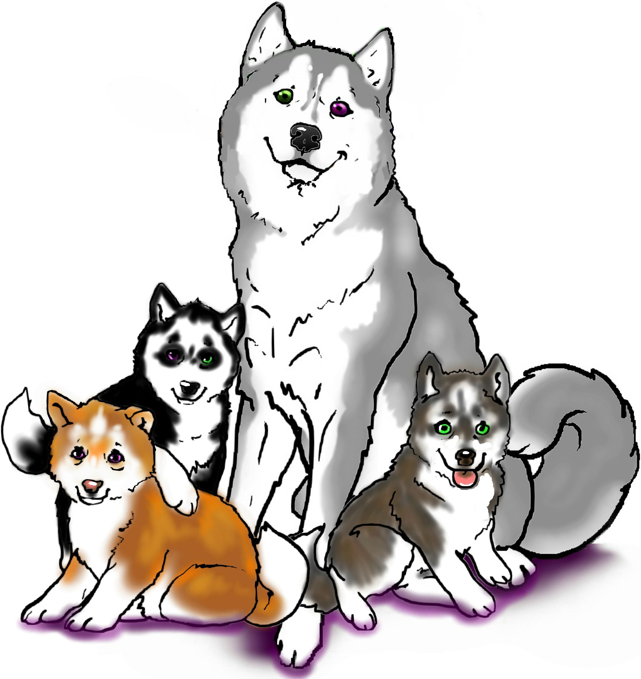 AKC Siberian Husky puppies! | dog drawings | Pinterest