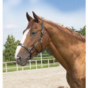 licol cuir grooming eric thomas pro quip d 39 une plaque pour graver le nom de votre cheval. Black Bedroom Furniture Sets. Home Design Ideas