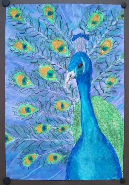 Peacock Portrait 5th Grade Oil Pastels And Watercolor Art