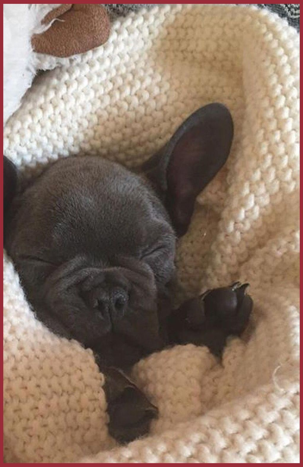 See More Concepts About French Bulldog Bulldog Puppies And French