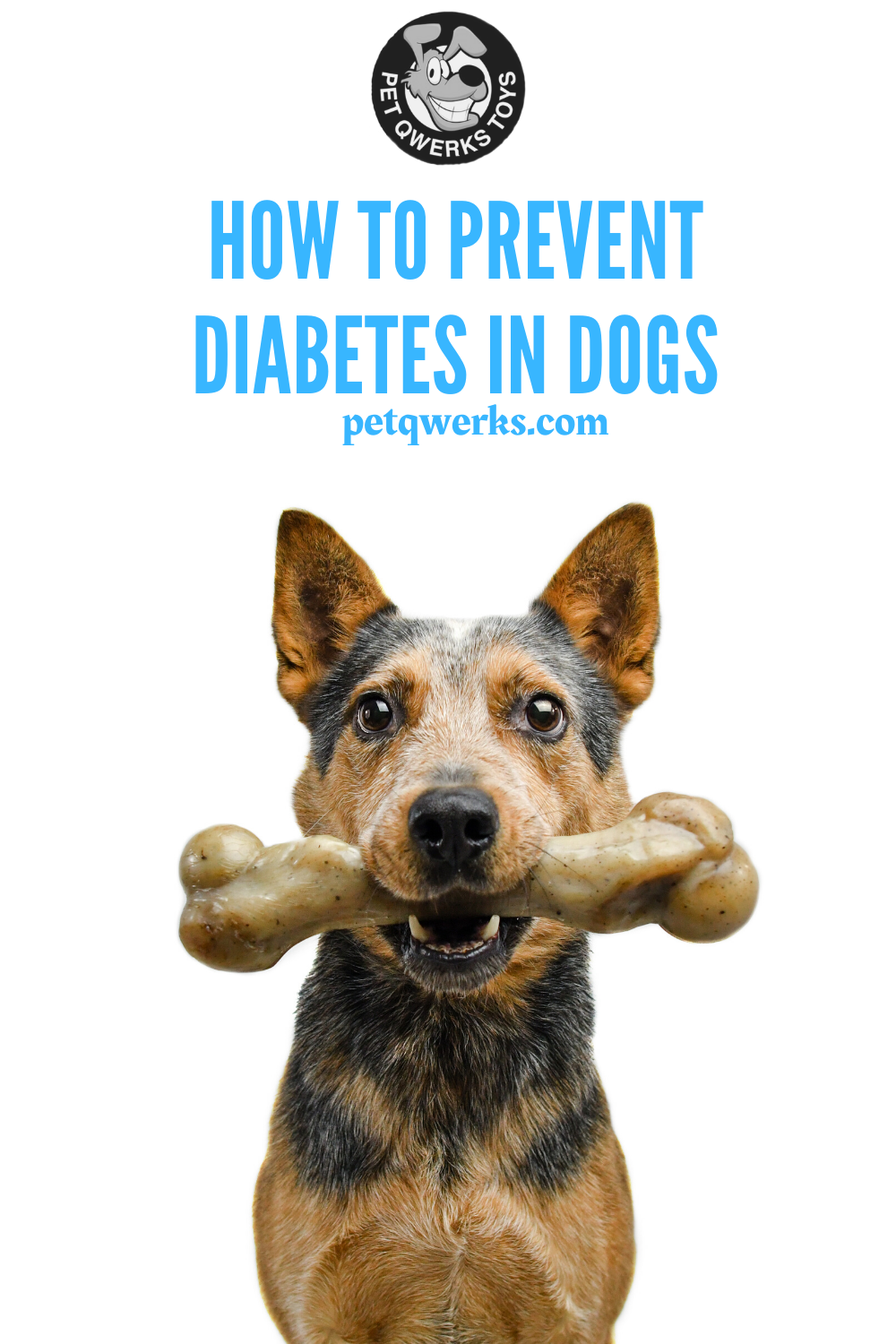 Preventing Diabetes in Dogs Diabetic dog, Dogs, Pets