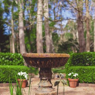 THE FOUNTAIN GARDEN: A formal garden centered around a babbling water feature, perfect for a more traditional wedding ceremony or photo shoot. See more of The Fountain Garden on the website today by clicking the link in my profile #thesecretgarden #gardenweddings #gardenforhire #sounternhighlandsweddings #nofilter #garden #gardenwedding #gardenforhire #bowral #bush #birchtrees #bowralgardens #wildesmeadow #weddingphotos #wedding #weddingvenue #reception #receptionvenue #robertson #lake…