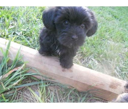 Dogs For Sale In Woodbridge New Jersey Puppies Puppies For Sale Cute Animals
