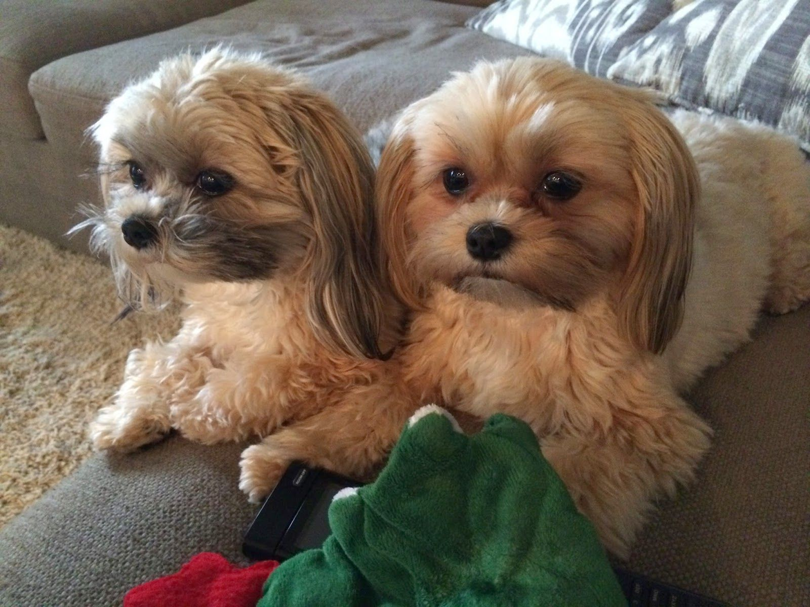 KARA'S STORIES June 2014 Puppies and kitties, Small dog