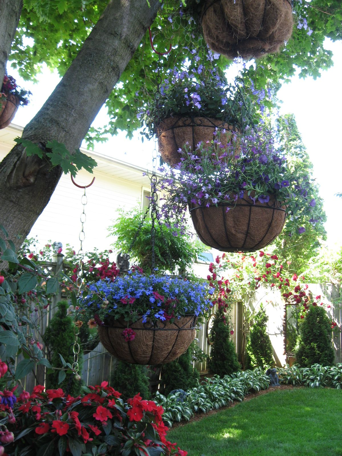 The Best Plants for Hanging Baskets on Front Porches | Plants for ...