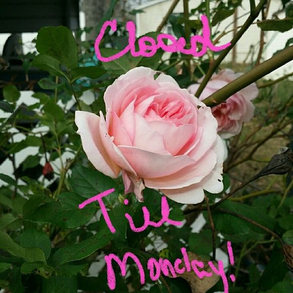 CLOSET CLOSED TILL MONDAY OUT OF TOWN TILL MONDAY! Other
