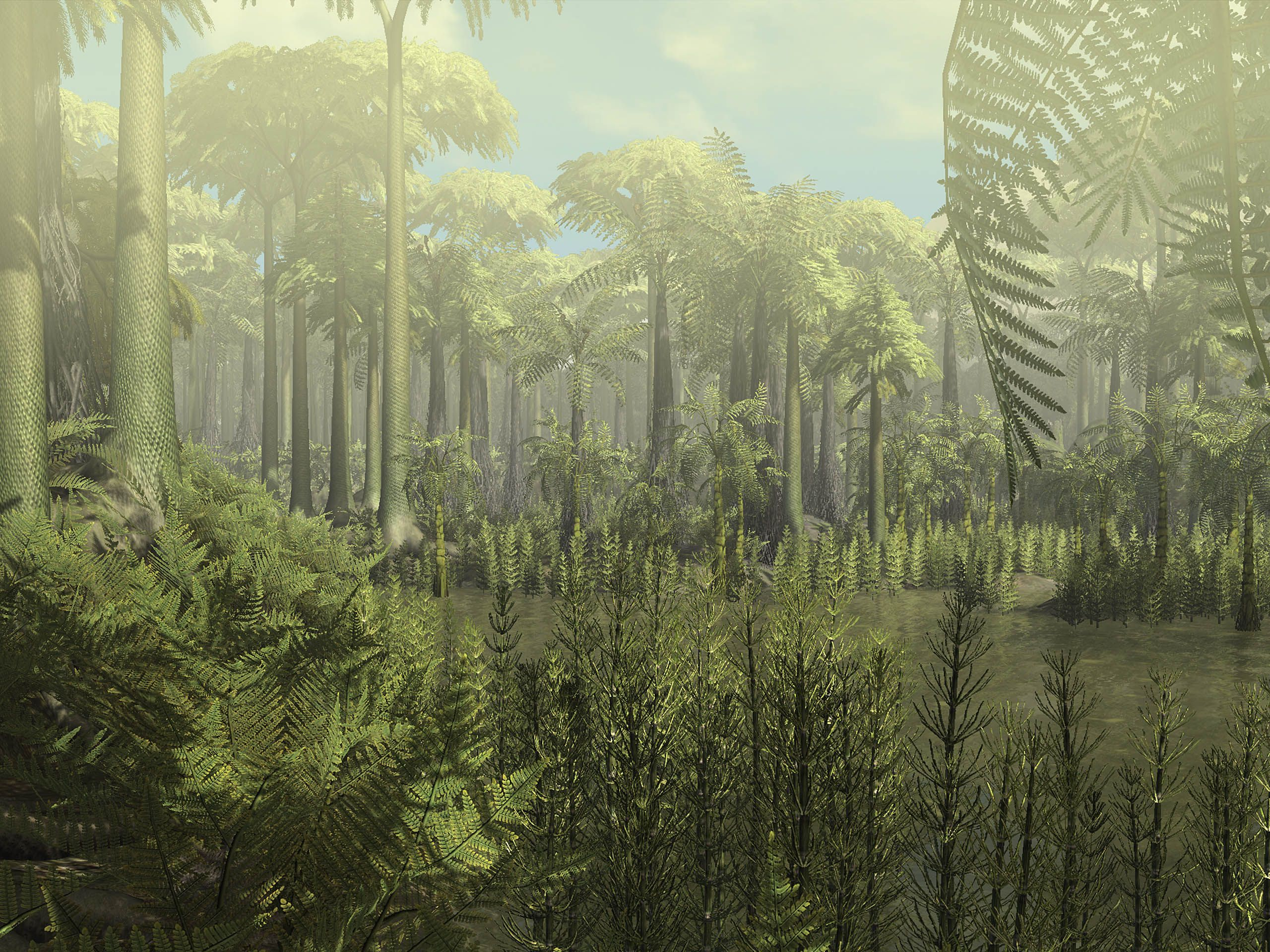 Carboniferous Forest Simulation Paleobotany Prehistoric