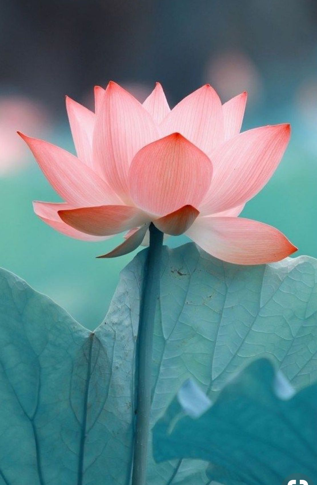 Flower Quotes In 2018 Meditation Spirituality January 27
