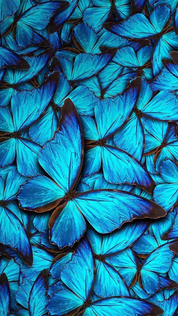 iPhone 8 Wallpaper Blau Schmetterling mit HD