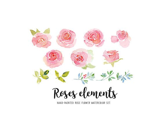 Rose Elements Watercolor Clip Art Pink Roses Individual Soft
