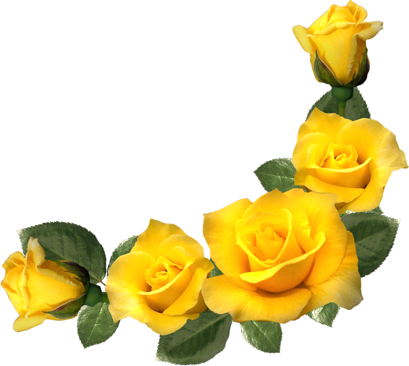 Картинки желтых роз на прозрачном фоне, красивые картинки
