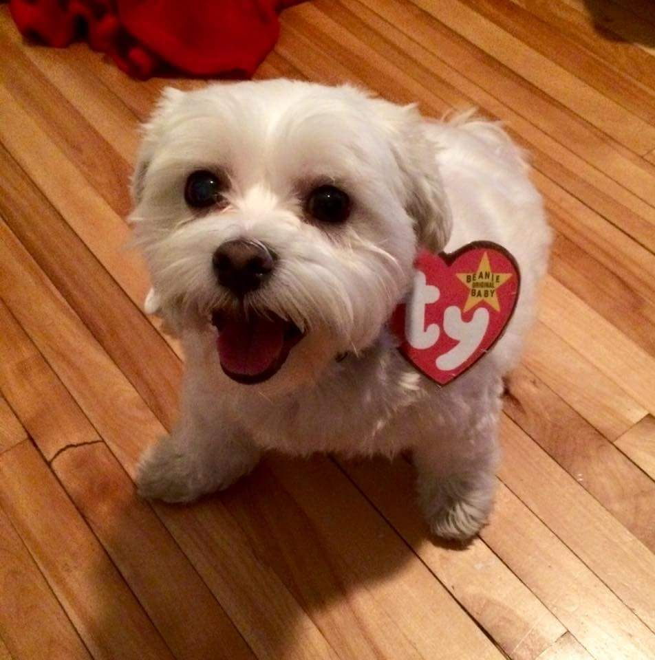 My Friends Dogs Costume Simple But Great Dog Halloween