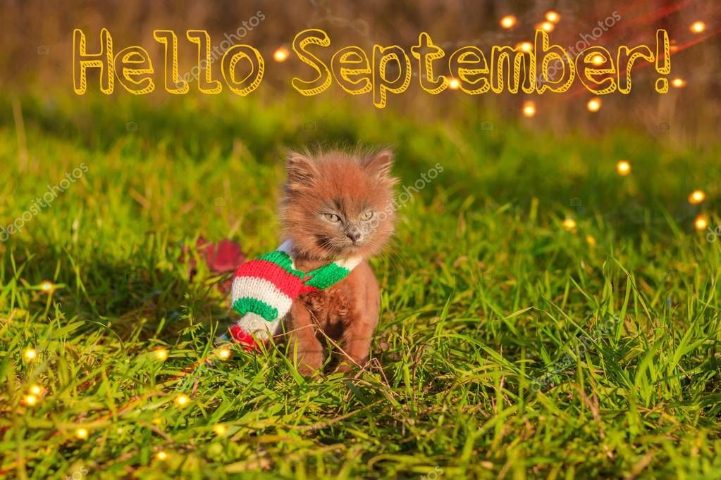 Hello September banner. New month. Greeting card. Golden autumn. The text in the , #ad, #month, #Greeting, #September, #banner #AD #helloseptember
