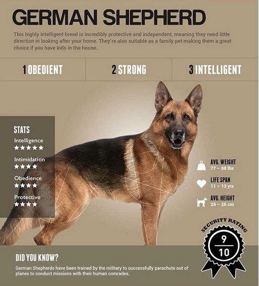 Pin By Rhonda Rogers Kaplan On German Shepherd Meme S German