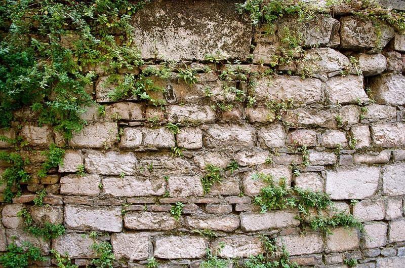 Stone Wall With Greenery Stone Walls Garden Stone Wall