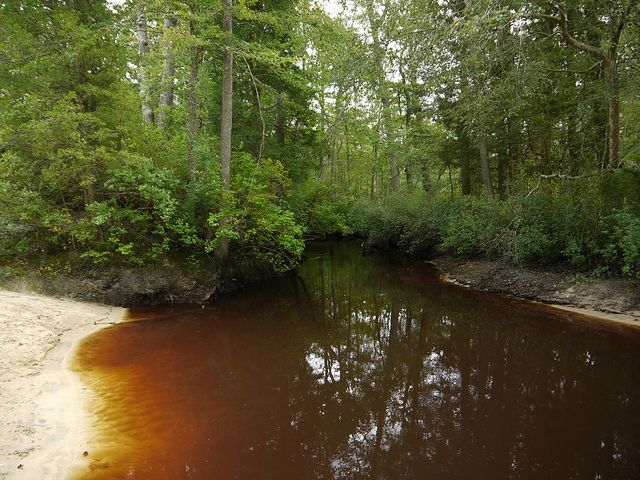 The Red Brown Water Of The Pine Barrens Water Image Photo