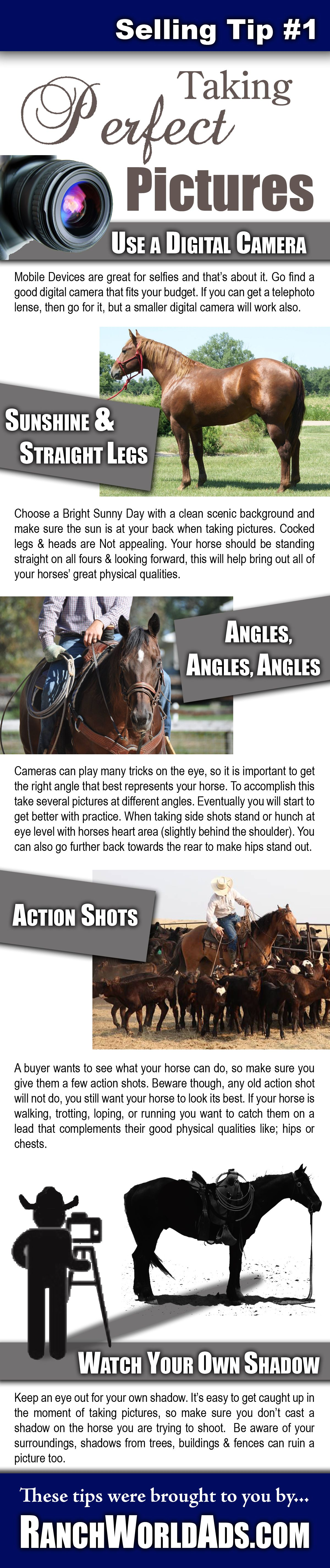 Tip 1 For Selling Horses Online Taking Perfect Pictures Equine Photography Horse Photography Horses