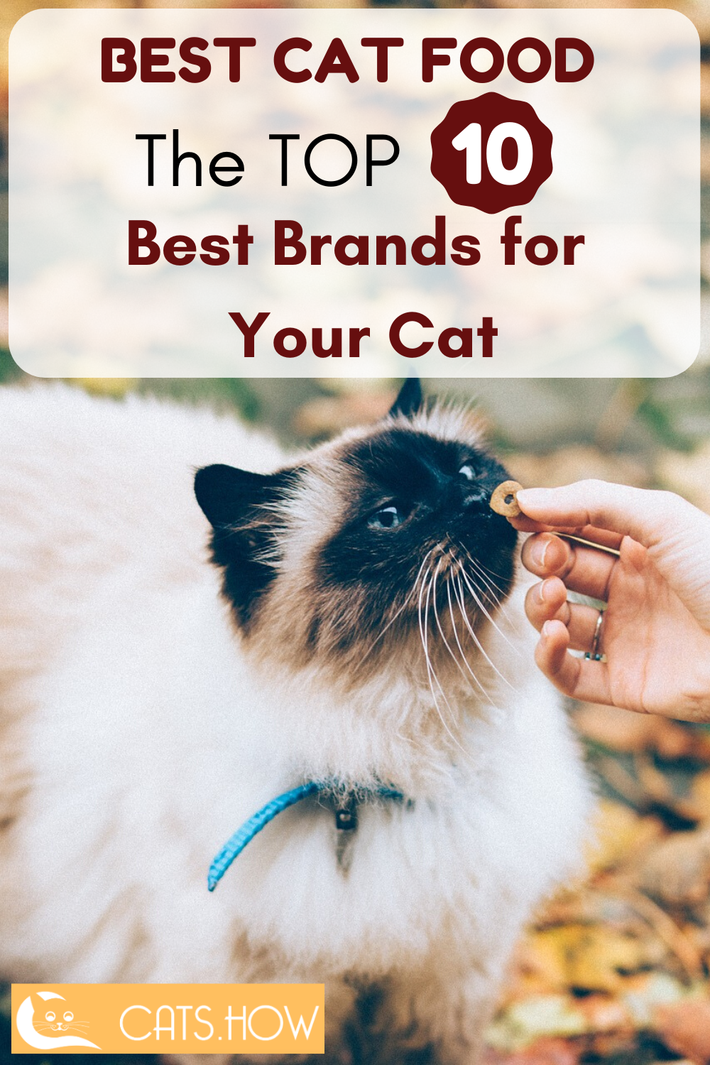 Best Cat Food The Top 10 Best Brands For Your Cat In 2020 Best Cat Food Cat Food Brands Cat Food