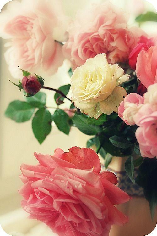 protestation fleurs cultiv es ou sauvages pinterest flores rosadas rosas et jardiner a. Black Bedroom Furniture Sets. Home Design Ideas