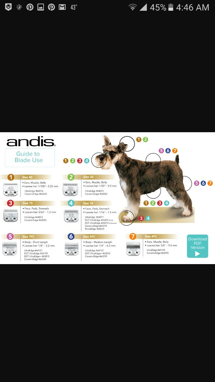 Andis Clipper Chart Dog Daycare Pet Grooming Dog Grooming