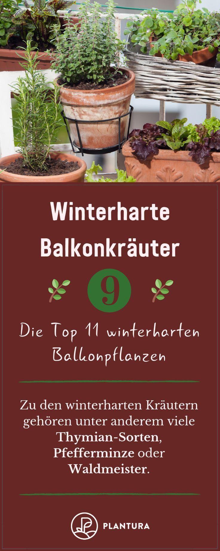 Winterharte Balkonpflanzen: Die Top 11 für Ihren Balkon #herbsgarden