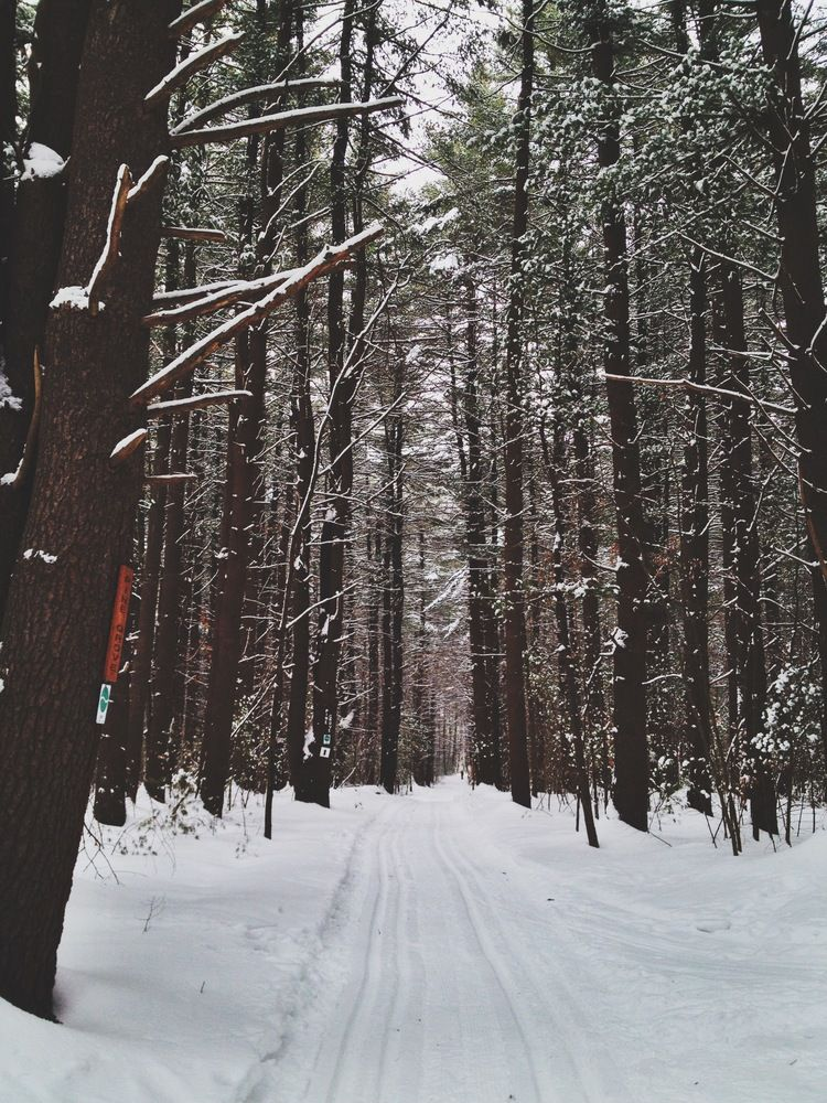Into the woods | CT