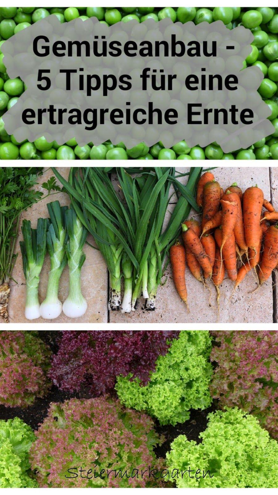 Ihr wollt auch frisches Gemüse aus dem eigenen Garten ernten? Hier sind unsere Tipps für eine ertragreiche Gemüseernte #herbsgarden