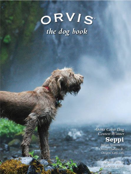 Welcome to the Orvis Cover Dog Photo Contest | Doggies and