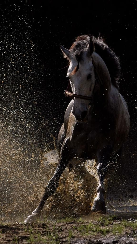 Iphone X Background 4k Horse Iphone Wallpaper Horse Iphone Wallpaper Winter Horse Iphone Wallpaper Horseshoe Iphone Wallpaper Black Horse Iphone Download Free Hewan