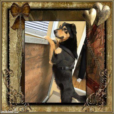 Hunde Foto: Edith und Samy - Mein bester Freund Hier Dein Bild hochladen: http://ichliebehunde.com/hund-des-tages  #hund #hunde #hundebild #hundebilder #dog #dogs #dogfun  #dogpic #dogpictures