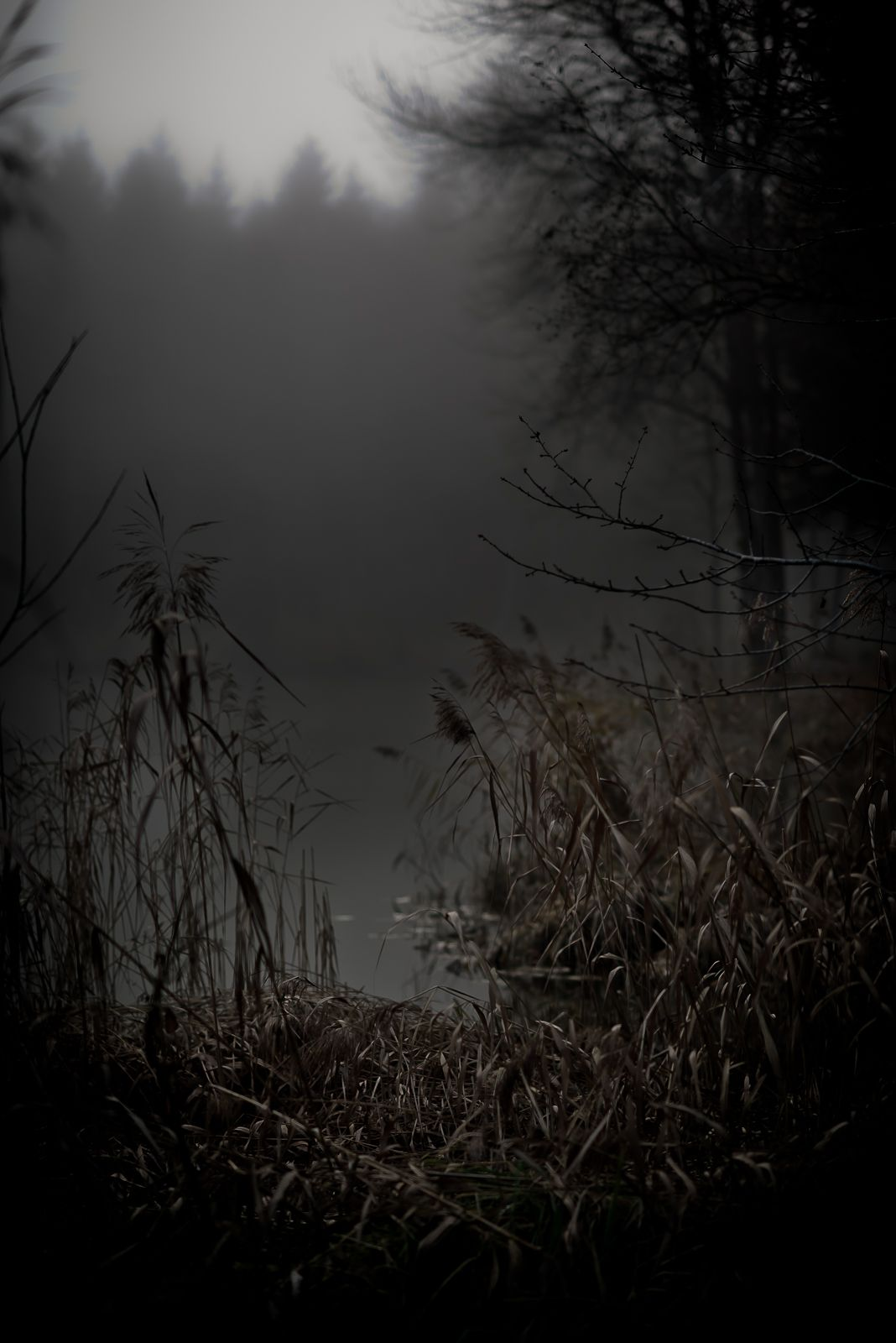 Season Of The Witch A Southern Gothic Tale Sense Of Place Autumn Photography Dark Autumn