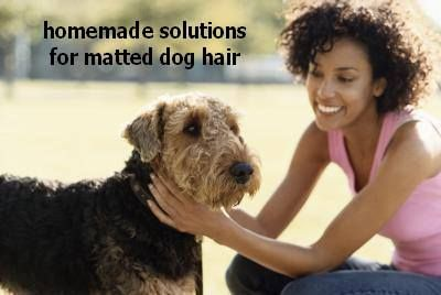 Homemade Solutions For Matted Dog Hair Try Cornstarch Make