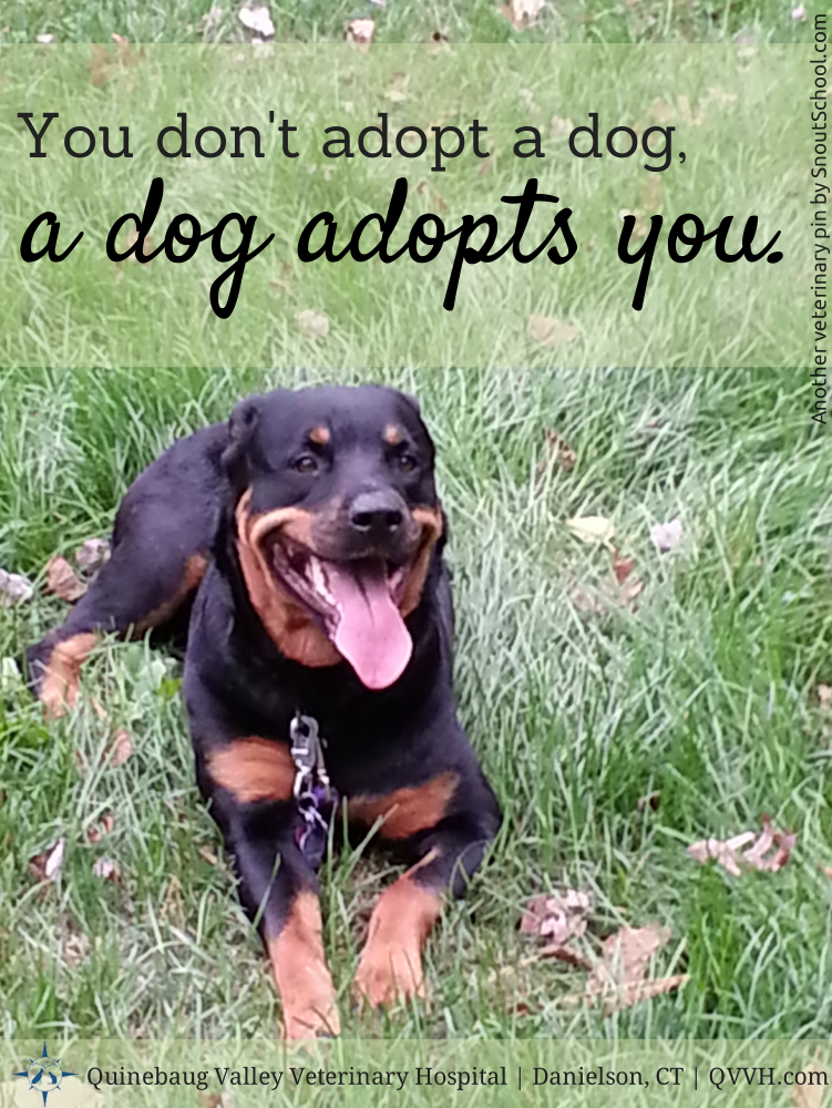 Adorable Pet Quote Your Dog Adopts You We Love Rottweilers At Our Connecticut Veterinary Hospital Visit Qvvh C Dog Adoption Dog Quotes Veterinary Hospital