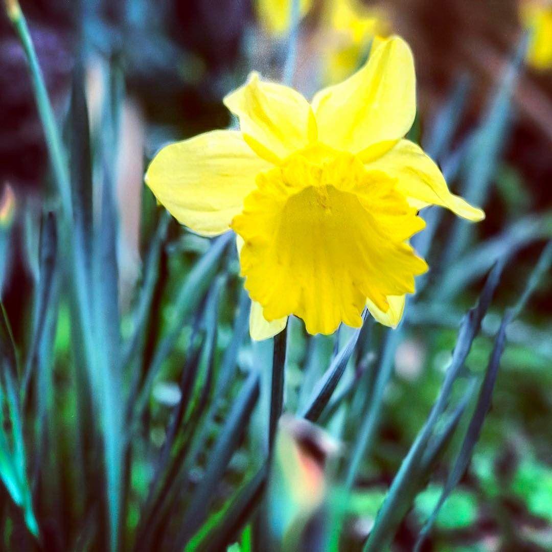 Springtime Flowers Portraitmode Iphone7plus Nature Greenery